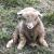 Lavant- the sitting ram.  He just looks  like a stuffed animal!